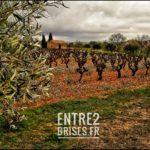 Le vin bio est issu de l'agriculture biologique. Il répond strictement aux critères de la réglementation bio européenne. Ce sont des exigences contraignantes qui s'appliquent depuis le mode de production jusqu'à la vinification, y compris dans l'Hérault.