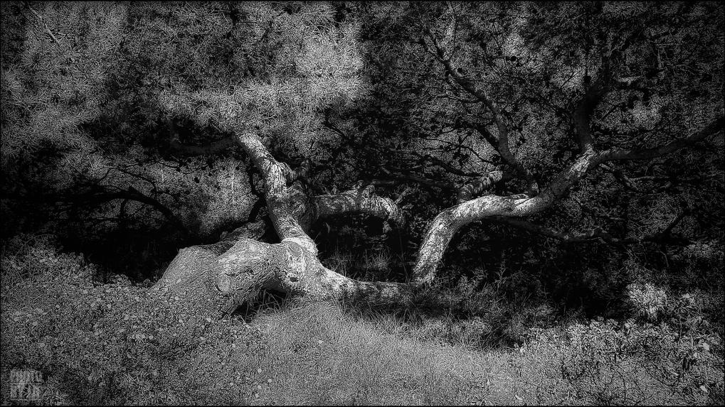 entre2brises_aupres_de_mon_arbre_1