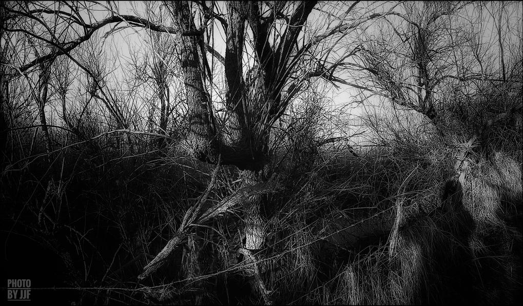entre2brises_aupres_de_mon_arbre_10