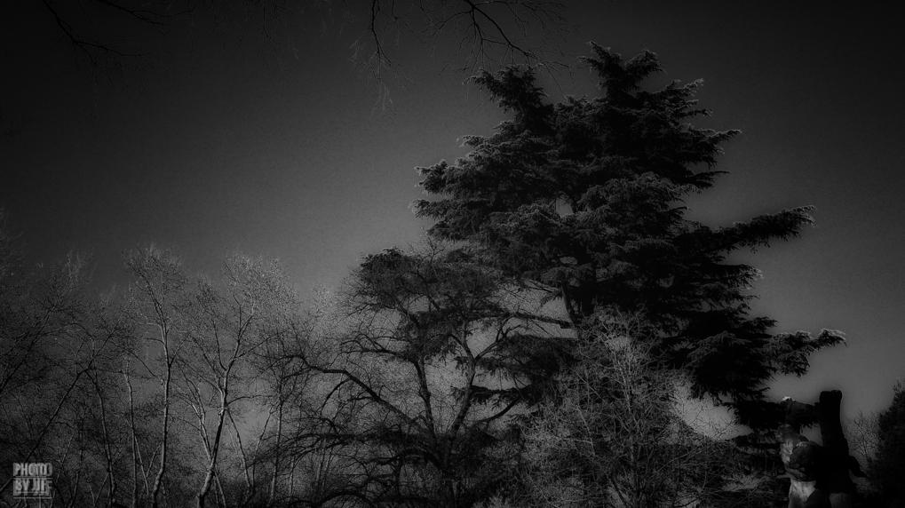 entre2brises_aupres_de_mon_arbre_11