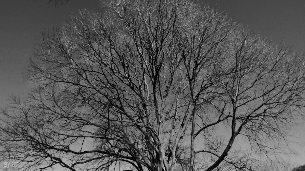 entre2brises_aupres_de_mon_arbre_12