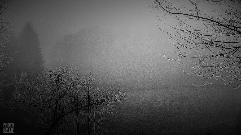 entre2brises_aupres_de_mon_arbre_15