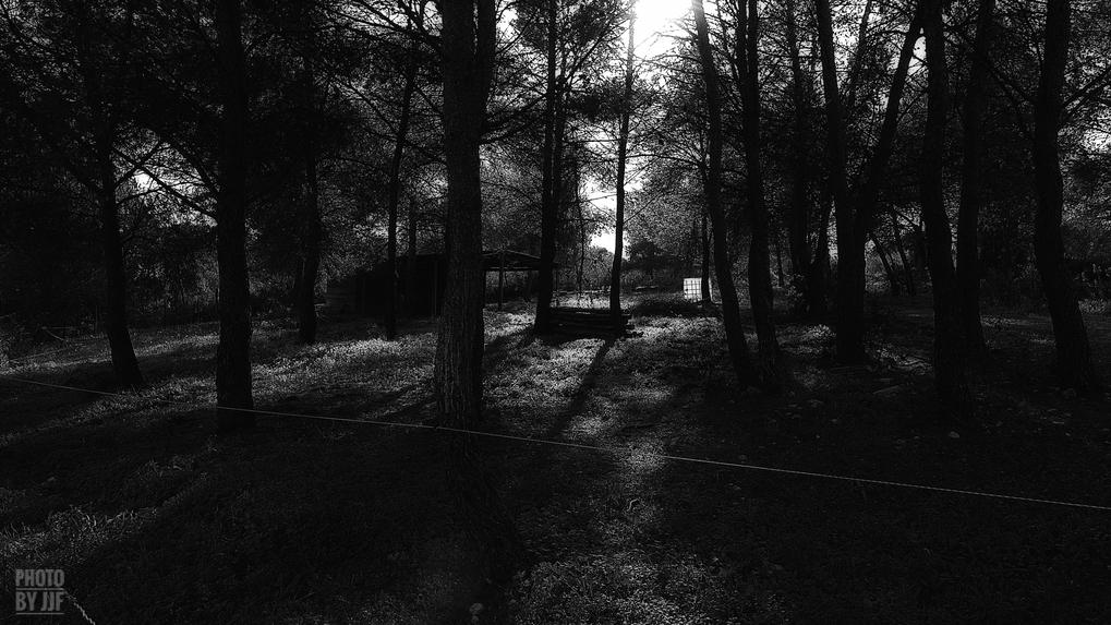 entre2brises_aupres_de_mon_arbre_18