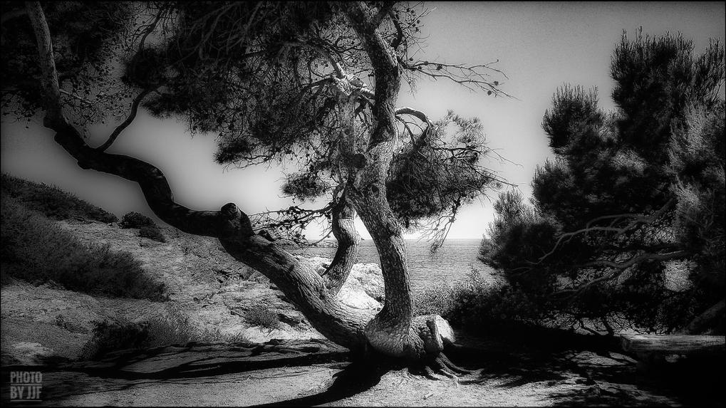entre2brises_aupres_de_mon_arbre_2