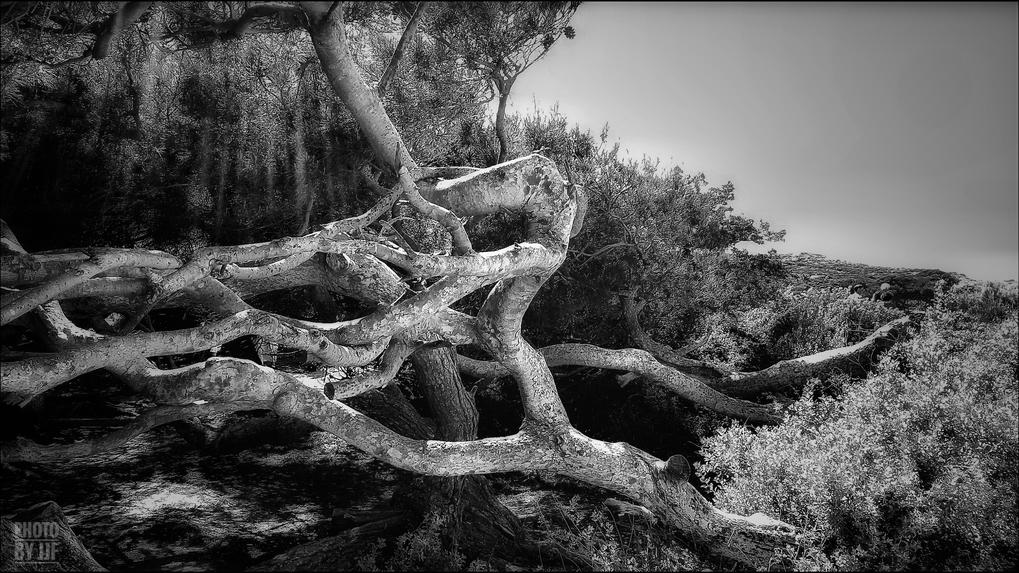 entre2brises_aupres_de_mon_arbre_4