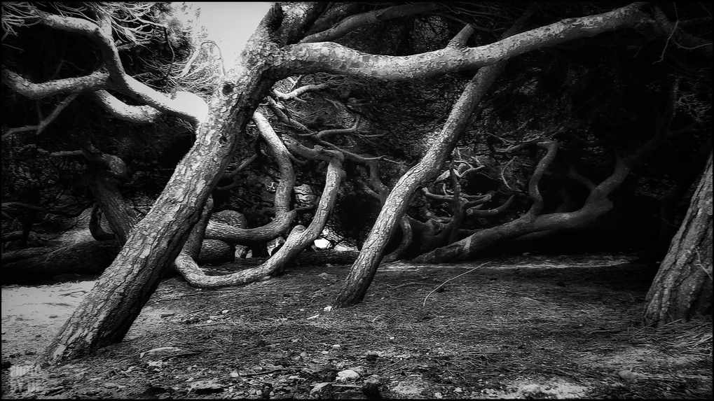 entre2brises_aupres_de_mon_arbre_5