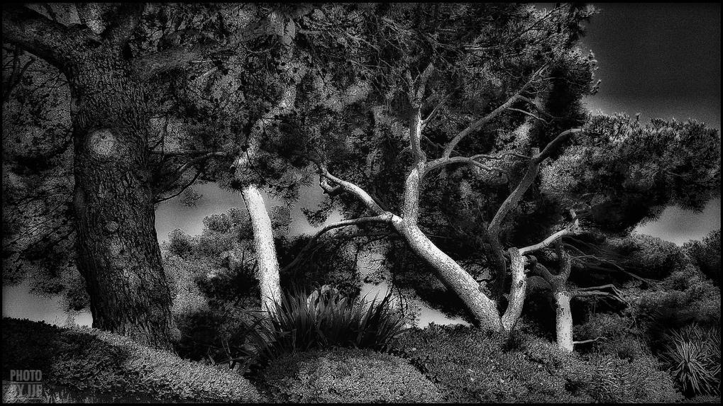 entre2brises_aupres_de_mon_arbre_7